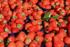 fruktjordgubbe Fotografering för Bildbyråer