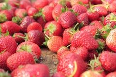 Fruktjordgubbe Arkivfoto