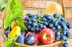 Fruktkorg på en bakgrund av en tegelstenvägg Fotografering för Bildbyråer