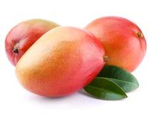 fruktmango Fotografering för Bildbyråer