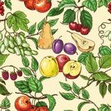 Fruktmodell Royaltyfri Illustrationer