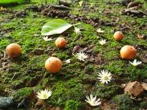 Fruktnd-blommor royaltyfri foto