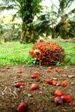 fruktolja gömma i handflatan Arkivfoton