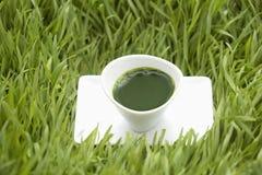 fruktsaft sköt wheatgrass Royaltyfria Bilder