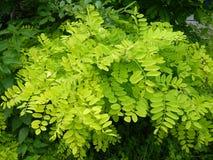 Fruktsam grönska Royaltyfria Bilder