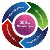Fruktsamhett pildiagram för menstruations- cirkulering Arkivfoton