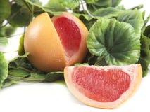 Fruktsammansättning av den mogna grapefrukten Royaltyfria Foton