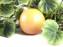 Fruktsammansättning av den mogna grapefrukten Royaltyfri Foto