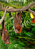 Fruktslagträ Arkivfoto