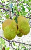 fruktstålar Royaltyfri Bild