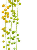 fruktträd arkivbild