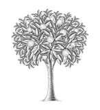 Fruktträd i gravyrstil Fotografering för Bildbyråer