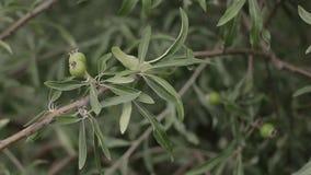 Fruktträd i trädgården, buskarna med blommor och härliga rabatter stock video
