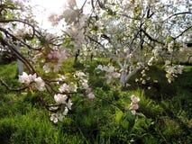 fruktträdgård Royaltyfria Foton
