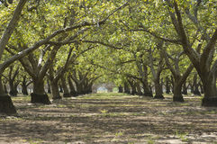 fruktträdgård Arkivbilder