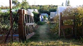 fruktträdgård Arkivbild
