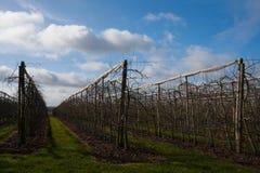 Fruktträdgård i Loiret Valley Arkivfoton