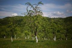 Fruktträdgård i Rumänien Fotografering för Bildbyråer