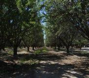 Fruktträdgård i sommar royaltyfri bild