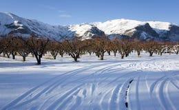 Fruktträdgård i vinter Royaltyfri Foto