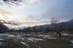 Fruktträdgård i vinter Royaltyfria Bilder