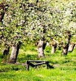 Fruktträdgårdar Royaltyfri Bild