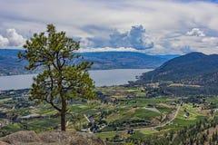 Fruktträdgårdar och Okanagan sjö från det Head berget för jättar nära Summerland British Columbia Kanada Fotografering för Bildbyråer