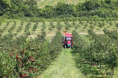 Fruktträdgårdbönder med den agric traktor- och plockningmaskinen Arkivfoto
