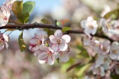 Fruktträdgårdträd med vårfärg Royaltyfria Foton