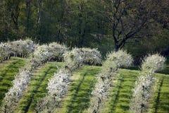 fruktträdgårdar Arkivbild