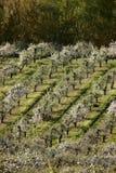 fruktträdgårdar Arkivfoto