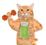 Frullato bevente della frutta del gatto di forma fisica dopo un allenamento Fotografia Stock