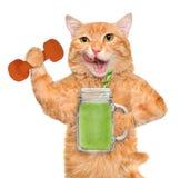 Frullato bevente della frutta del gatto di forma fisica dopo un allenamento Immagini Stock