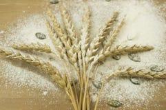 Frumento con farina Fotografia Stock