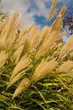 frumento di rame della pianta Immagine Stock Libera da Diritti