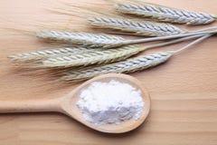 Frumento e farina Immagine Stock Libera da Diritti