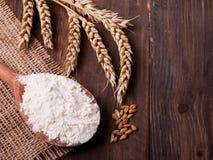 Frumento e farina Fotografia Stock Libera da Diritti