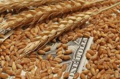 Frumento e soldi Immagini Stock Libere da Diritti
