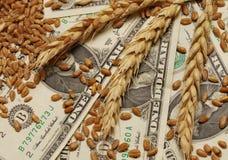 Frumento e soldi Immagine Stock Libera da Diritti
