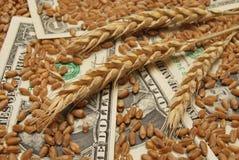 Frumento e soldi Fotografie Stock Libere da Diritti