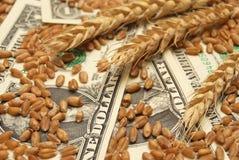 Frumento e soldi Immagini Stock