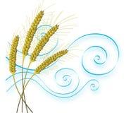 Frumento e vento stilizzati Fotografie Stock