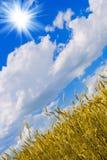 Frumento ed il sole Fotografia Stock Libera da Diritti