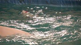 Frunce de dos ballenas de la beluga en aros del agua almacen de metraje de vídeo