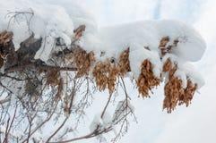 Frunch i snön Royaltyfri Bild
