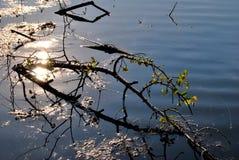 Frunch på vattnet Arkivfoto