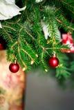 Frunchgranträd med den unga kotten i vas Royaltyfri Fotografi