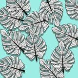 Frunze 2 Fotografie Stock Libere da Diritti