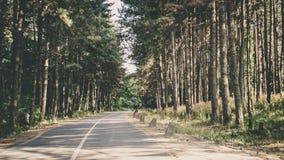 Fruska gora National Park, Serbia. Exploring beautiful landscapes of Serbia Stock Photos