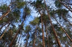 Fruska Gora park narodowy Obrazy Royalty Free